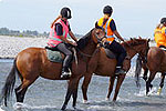 ARION HORSE TREKKING - Christchurch
