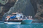 BLACK CAT CRUISES - Akaroa