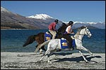 DART STABLES - Glenorchy, Queenstown
