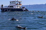 DOLPHIN ENCOUNTER - Kaikoura