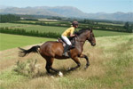 KOWHAI EQUESTRIAN FARM STAY - Oxford