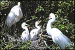 WHITE HERON SANCTUARY TOURS - Whataroa, Westland